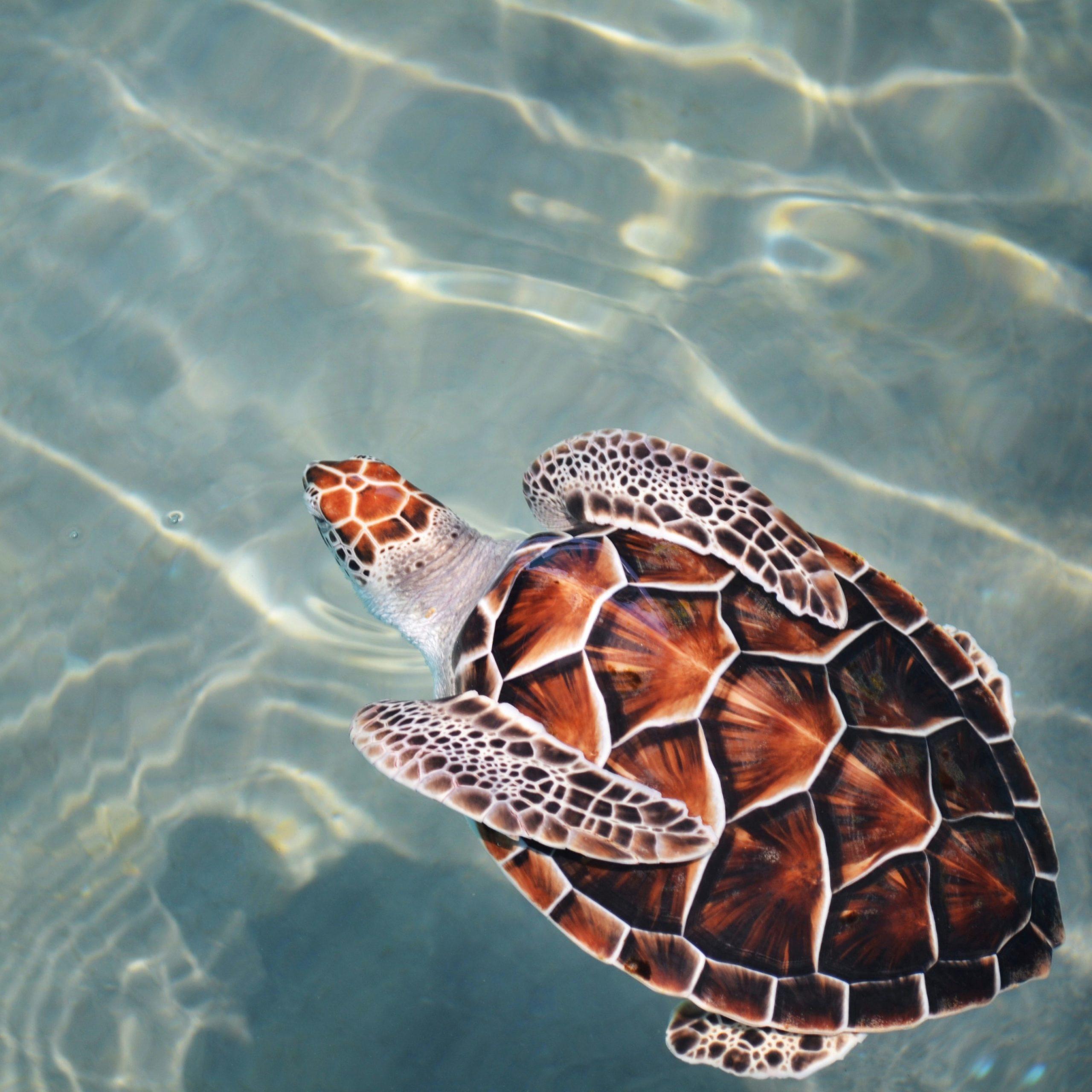New Swimmer